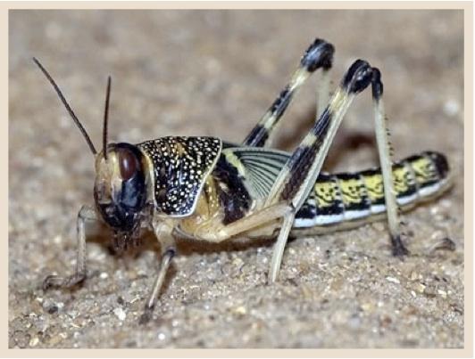 Locust: Best Post Ever