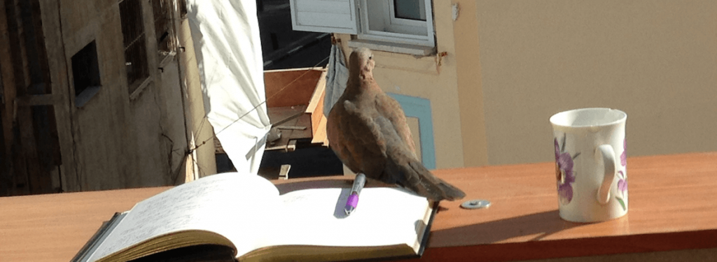 A mourning dove sits on a notebook on the railing of an urban terrace with apartment buildings in the background