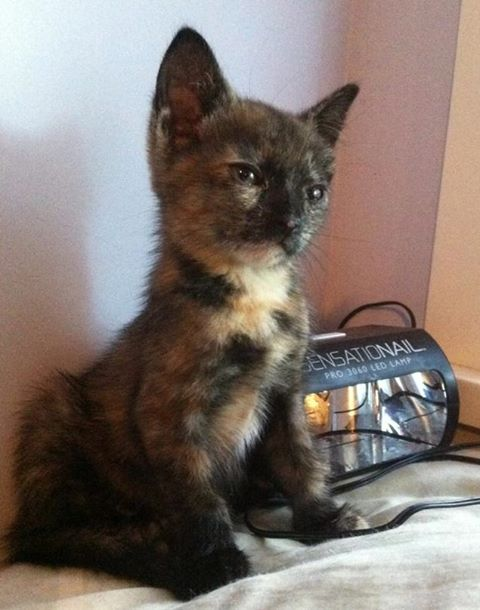 """Tiny tortoise shell kitten with wise expression, illustrating a blog post called """"Symbol of God or Ordinary Kitten?"""""""