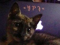 Symbol of God or ordinary kitten? On spiritual dreams