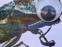 Eye of the Animal: Kallah Class Poem