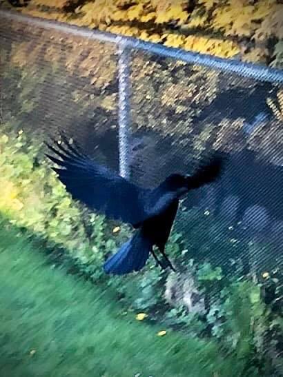 Crow: Talking the Talk
