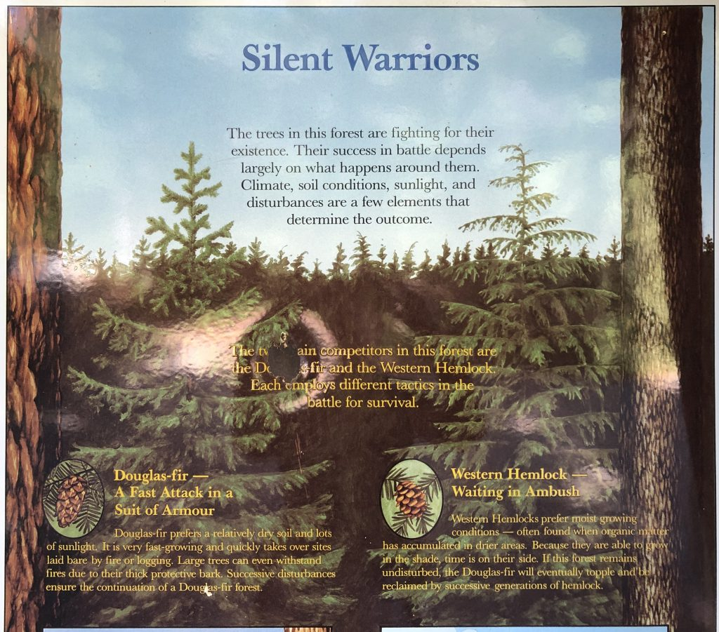 "Interpretive educational sign from at a park trailhead explaining that Douglas Fir and Western Hemlock trees compete for space in the forest. It calls them ""silent warriors"" vying for ""success in battle"" against one another."