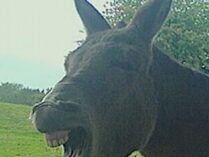 This Donkey is No Bystander