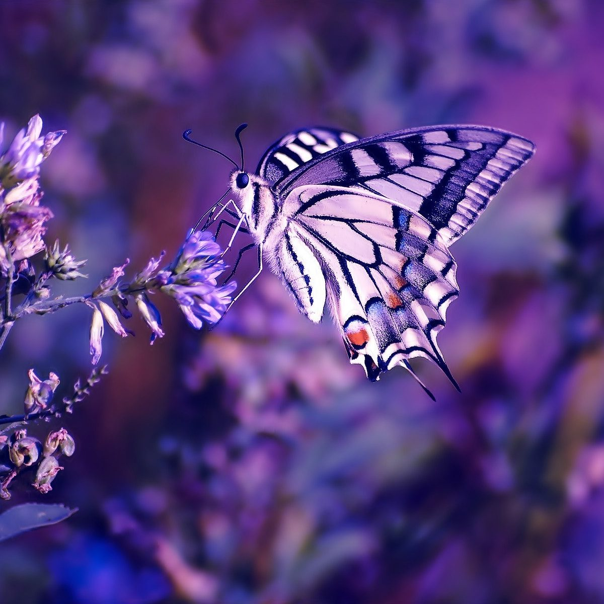 beautiful-wallpapers-purple-nature-wallpaper-wallpaper-35654